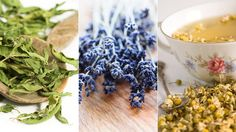 3 different types of herb that help anxiety