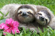 But they can also be the most fun couple to hang out with ever.   21 Ways Sloths Are Living Life Right