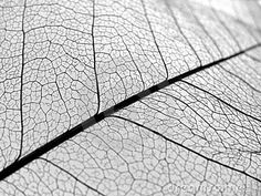More leaf vein pattern ideas - decal?