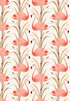 Flamingo pattern Illustration by Cocorrina