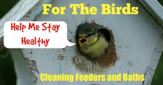 For the Birds: Cleaning Feeders and Baths