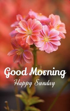 Blessed Sunday Morning, Good Morning Happy Saturday, Good Morning Good Night, Good Morning Wishes, Good Morning Quotes, Morning Messages, Morning Texts, Morning Post, Morning Blessings