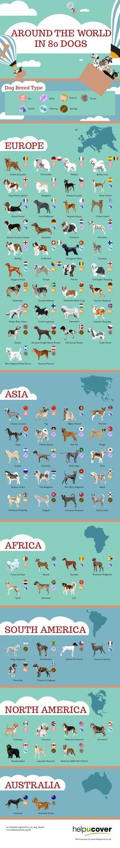 Around the World in 80 Dogs #Dogs #Pets #infographic