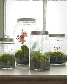 woodland jar terrariums