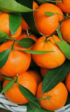 Orange fragrance oil lifts the whole fragrance with citrus hints. Fruit And Veg, Fruits And Vegetables, Fresh Fruit, Citrus Fruits, Orange Wallpaper, Food Wallpaper, Orange Aesthetic, Beautiful Fruits, Orange Fruit