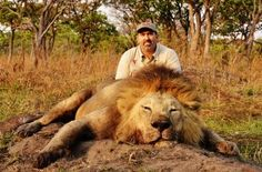 Hunter: In response to the outrage sparked by photos like this one of Aaron Neilson, with the corpse of a lion, he told MailOnline 'Hunting is still the best conservation tool we have throughout much of wild Africa' Delete Social Media, Natural Born Killers, Thank You For Caring, Male Lion, Network For Good, Stop Animal Cruelty, Animal Welfare, Animal Rights, Conservation