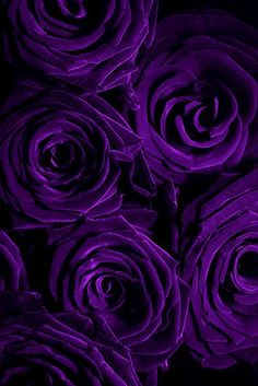 Most recent Pics Purple Flowers rosas moradas Ideas Purple flowers usually are elegant flowers. There're lavish and expensive, fashionable as well as boheme. Violet Aesthetic, Dark Purple Aesthetic, Lavender Aesthetic, Aesthetic Colors, Purple Flowers Wallpaper, Purple Wallpaper Iphone, Flower Phone Wallpaper, Flower Wallpaper, Wallpaper Desktop