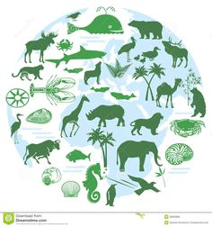 Biodiversity is the variety of life, the variety of different animals living in an ecosystem working together to make the system function properly.