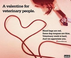 how to become a veterinary technician in canada