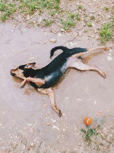 Having a muddy good time at H.O.T. Dog Park! - Waco, TX - Angus Off-Leash #dogs #puppies #cutedogs #dogparks #waco #texas #angusoffleash