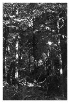 9.18.12 Robert Adams 'Light Balances (1)' 2011 Gelatin-silver print