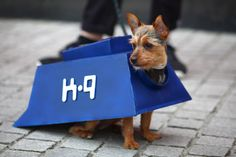 Lovely little dog cosplays as K-9....Love it!! If only I had a dog.....