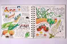 My allotment journal for July