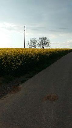 # bretten # field # tree # shadow