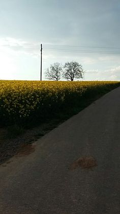 # bretten # field # tree # shadow