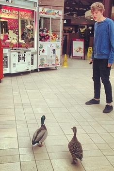 Ash and Ducks! I know I've already pinned this but in the previous pic his head was cut off