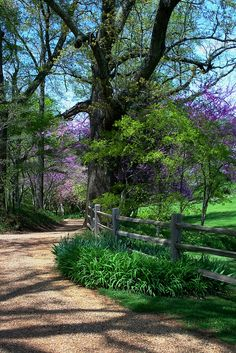 Three-rail split rail fence. Fence defines the property edge and driveway, yet allows shrubs and perennials grow over and through it.