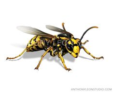 wasp illustration, front view