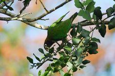 Costa Rica 2/15/16 Rancho Naturalista