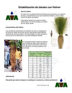 Estabilización de taludes con vetiver una alternativa ecológica