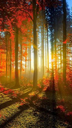 Image discovered by Vivi Rindom. Find images and videos about nature, sun and autumn on We Heart It - the app to get lost in what you love. Foto Nature, All Nature, Autumn Forest, Forest Light, Autumn Fall, Autumn Leaves, Fall Trees, Forest Path, Magical Forest