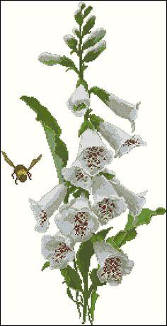 White Foxgloves
