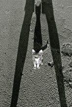 Bodrum, Turkey (birth~ cat) - a photo by ESRA SIRMAN