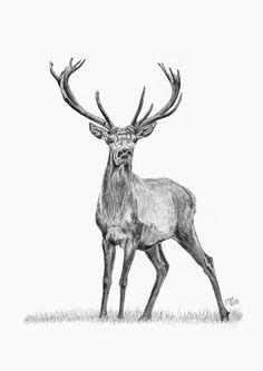 Whitetail Deer Buck Drawing by Iren Faerevaag Drawing Tips deer drawing Grass Drawing, Deer Drawing, Drawing Tips, Drawing Drawing, Unique Drawings, Outline Drawings, Animal Drawings, Deer Sketch, Wolf Sketch