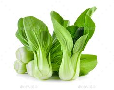 Buy Bok choy vegetable on white background by sommai on PhotoDune. Bok choy vegetable on white background Pak Choy, Cabbage Seeds, Vegetables Photography, Compost Soil, Seed Packaging, Chinese Cabbage, Seed Bank, Raw Vegetables, Veggies
