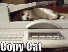 Image result for funny images of animals with captions. For more of my craziness follow me on Facebook: https://www.facebook.com/neil.milliner.9