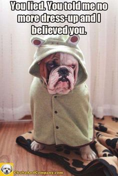 bulldogs with sayings - Google Search