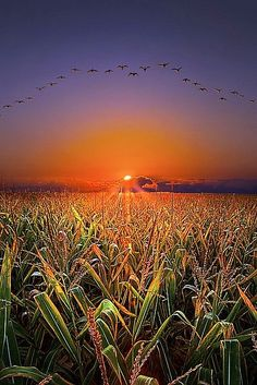 The Picturesque view of Sunset and Birds | See more Amazing Snapz