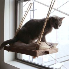 DIY Cat Window Perch