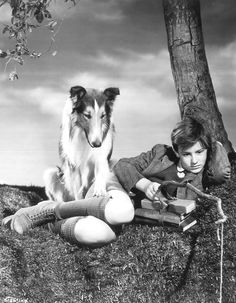 Pal (June 4, 1940 – June 1958) was a male Rough Collie actor and the first in a line of such dogs to portray the fictional female collie Lassie in film and later in television. Pal's success in Lassie Come Home (1943) led to 6 more MGM films: Son of Lassie (1945), Courage of Lassie (1946), Hills of Home (1948), The Sun Comes Up (1949), Challenge to Lassie (1949) & The Painted Hills (1951).