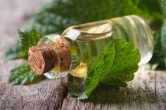 Kapky z meduňky, Foto: ©SAMphotostock.cz/lenyvavsha