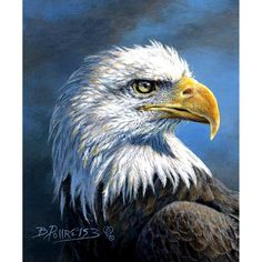 Wild and Beautiful Eagle, Cotton Quilt Fabric, coordinate blue, digitally printed broadcloth Fabric Panel by Riley Blake Designs 911 Tribute, Eagle Pictures, Panel Quilts, Cotton Quilts, Cotton Fabric, Riley Blake, Club, Fabric Panels, Dog Friends