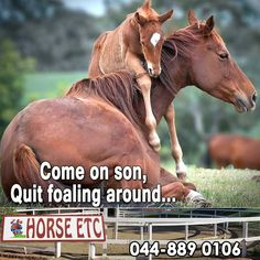 Horse ETC wishes you all an excellent Friday! #funfriday #lifestyle #horsecare