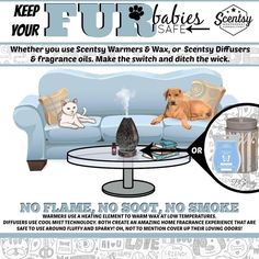 Scentsy pets https://LaurenKety.scentsy.us