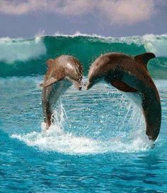 Swimming with dolphins The Ocean, Ocean Life, Orcas, Water Animals, Baby Animals, Beautiful Creatures, Animals Beautiful, Dolphin Photos, Cutest Animals