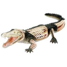 Revell X Ray Crocodile Anatomy Model Kit 02095 Crocodile Animal, Anatomy Models, Animal Anatomy, Dinosaur Toys, Dinosaurs, Science Biology, Teaching Science, Most Beautiful Animals, Kids Bike