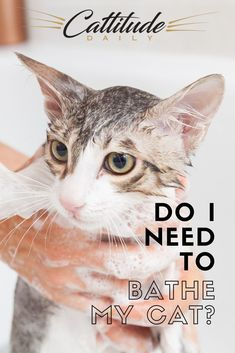 Yes, cats groom themselves often and take their own form of a bath daily. But do cats ever need their humans to bathe them? Cat Care Tips, Dog Care, Cat Health Care, Health Tips, Medication For Dogs, Cat Bath, Kitten Care, Cat Behavior, Parenting 101