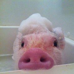 He loves his baths - Imgur