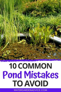 Water Plants For Ponds, Water Garden Plants, Pond Plants, Garden Ponds, Koi Ponds, Water Gardens, Small Backyard Ponds, Ponds For Small Gardens, Outdoor Ponds