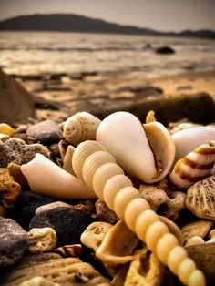 a pile of shells at the beach