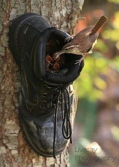 10 Delightful DIY Birdhouses - You can always use an old boot  to make a happy home.