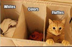 Prenez soin de bien trier votre lessive...