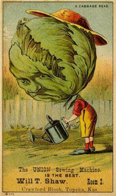 Cabbage Head Boy