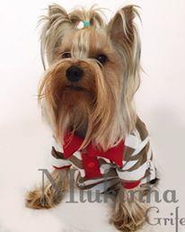 Dog model Zeus