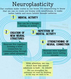 on Meditation & Mindfulness Neuroplasticity simplified. How to habits get wired in the brain & how can we rewire? How to habits get wired in the brain & how can we rewire? Brain Based Learning, Endocannabinoid System, Brain Science, Science Education, Physical Education, E Mc2, Traumatic Brain Injury, Baguio, Mental Health