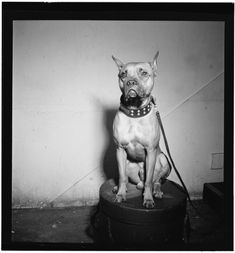 Billie Holiday's Dog, Master, '40s | 40 Precious Dog Photos From The '40s